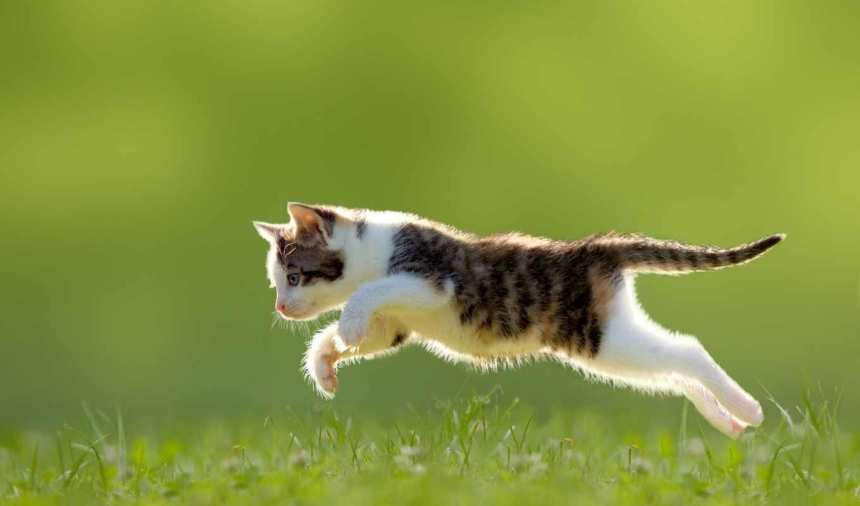 cats, котенок, кот, коты, stock, фото, вектор, котята, растровый, funny, клипарт, собака, fone, векторе, фотосток,