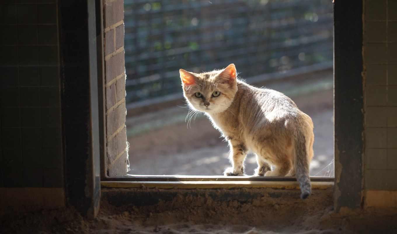 кот, red, песчаный, окно, смотрит,