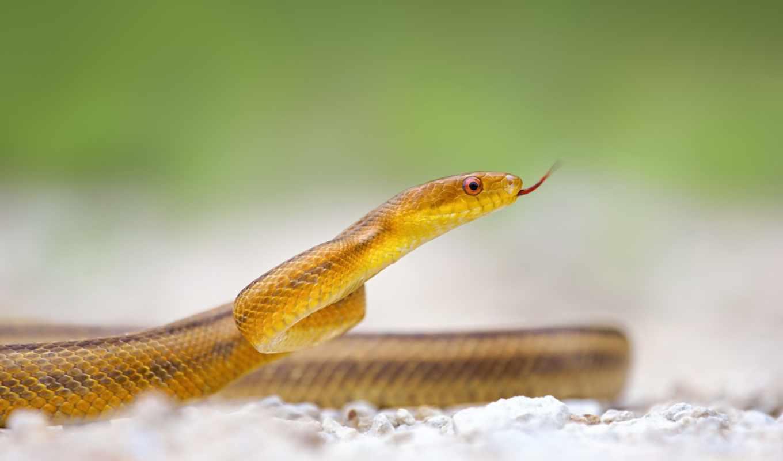 snake, www, imagetext, zhivotnye,