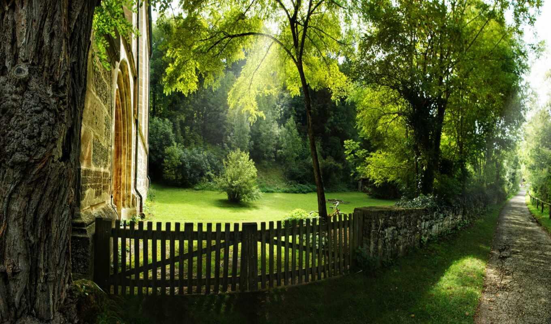 зелень, деревья, забор,