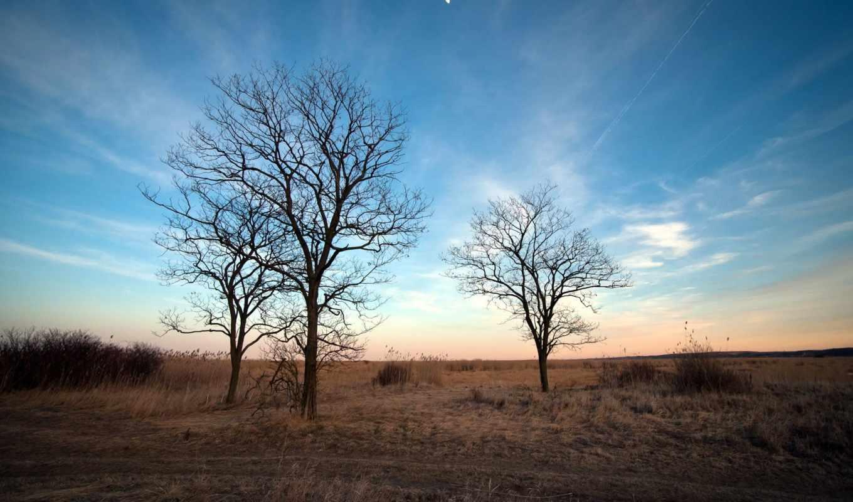 природа, деревья, весна, пейзаж,