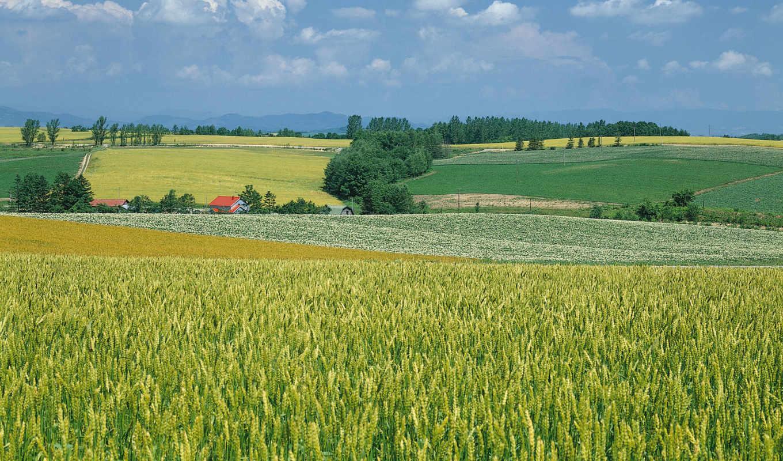 ферма, scenery, landscape, images, paintings,