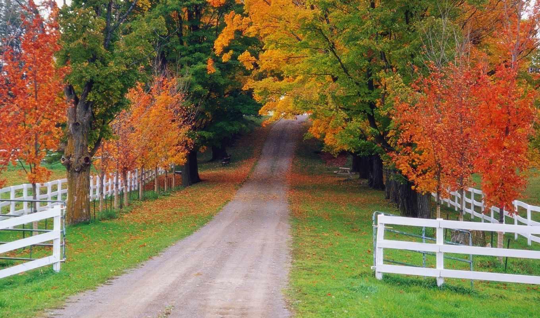 осень, природа, дорога, лес, забор,
