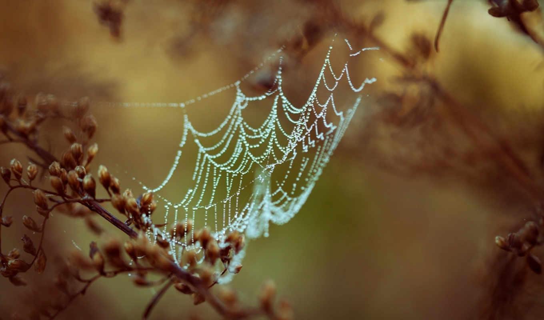 web, spider, dew, drops, паутина, роса, капли,ветки,