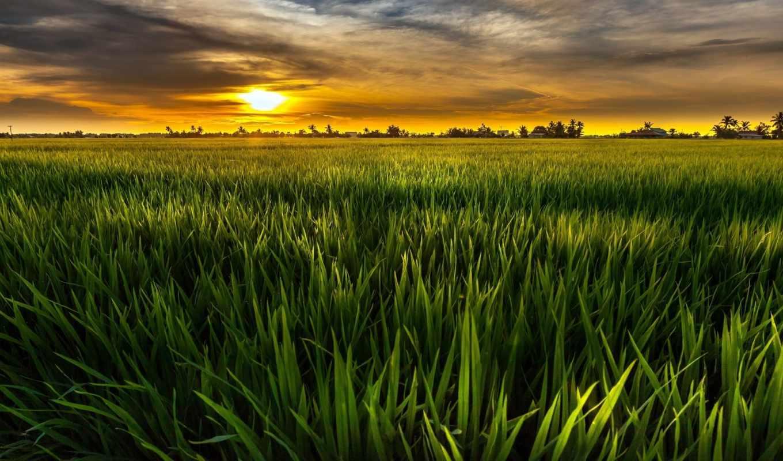 природа, небо, landscape, страница, поле, sun,