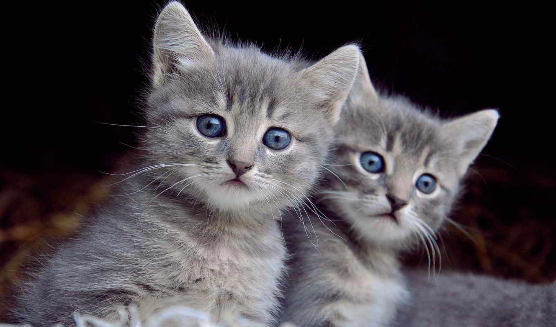 кот, cute, visual, effects,