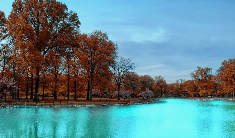осень, trees, park, ноутбук, планшетный, телефон, mac, mobile,