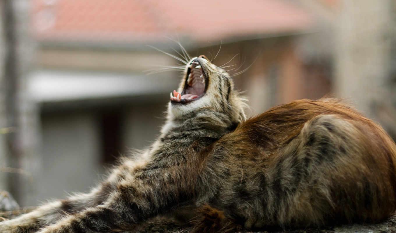 кошки, коты, мартовские, котопедия, орут,