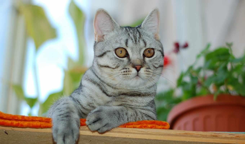 взгляд, animals, коты, кошки, фото,