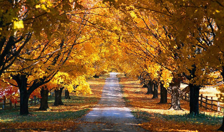 осень, деревья, природа, rutier, toamnă, дорога, парк, года, facebook, времена, jesen, wallpapere, картинка, кнопкой, картинку, листва, правой, pictures,