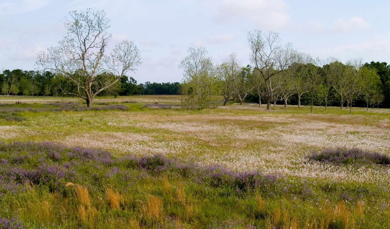priroda, les, трава, cvety, pole,