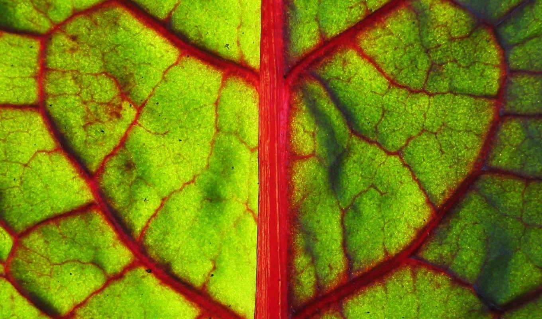 лист, зеленый,скачать