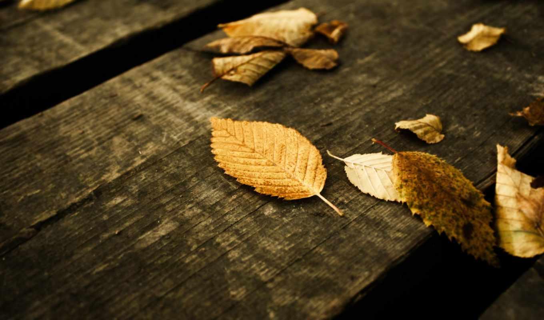 листья, скрипт, сайта, возможности,