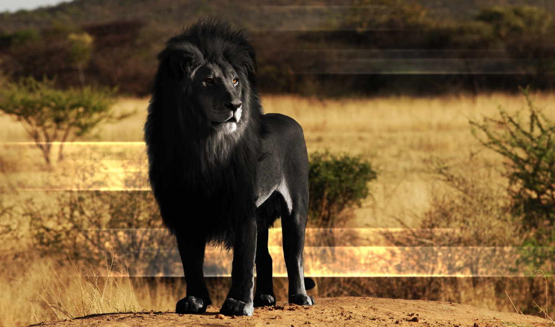 lion, black, высокого, качества, сайте, нашем, февр, need, выберите, этого,