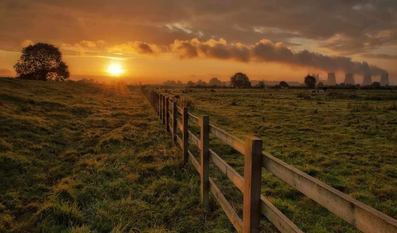 перо, забор, трава, деревья, коровы, вечер, sun,