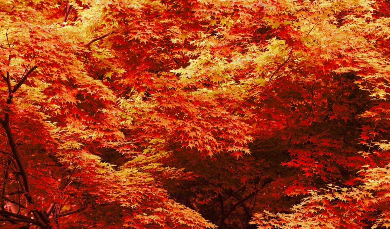 лес, листья, деревья, зелёный, bush, maple,