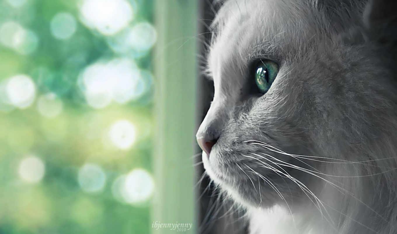 wallpapers, cat, white, close, обоев, up, племя, люблю, часть, посидеть, анимашка, красивых, кошка, микс, под, лучший, все, kb, wallpaper, выпуск, телефон, buster, software,