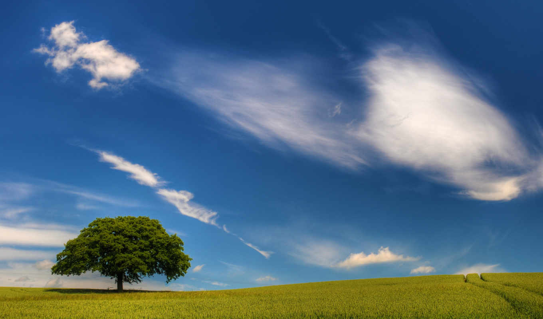 поле, пейзажи, iphone, небо, дерево, дорога,