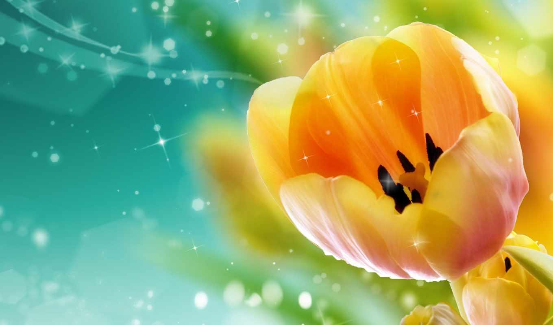 тюльпаны, cvety, бутон,