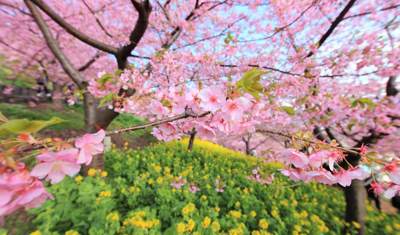 весна, красивые, марта, цветы, дерево, цветение,