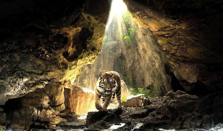 тигр, высококачествен, ваше, десктопмания, украсят, тигров,