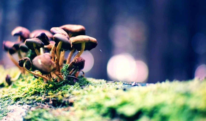 грибница, показывать, грибы, эротику, картинка, kittens, cats, mushrooms, мох, bokeh, пейзажи, light, zoo, animals,