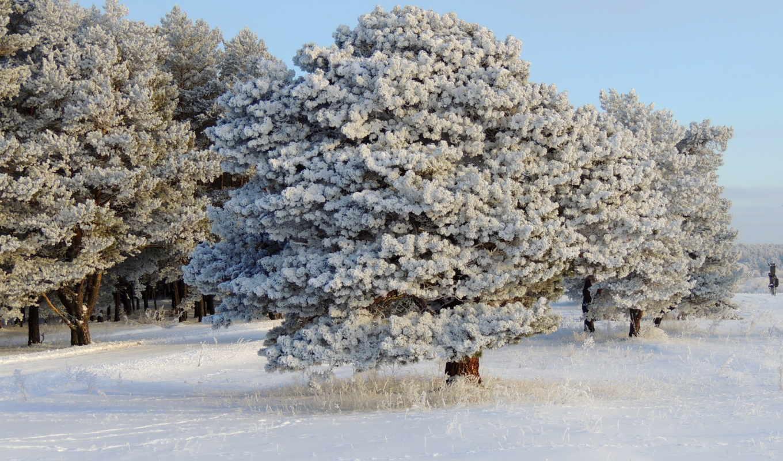 winter, снег, смотреть, красавица, обою, деревья, года, размере, взгляд, дома, времена, животные, истинном, февр, природа,