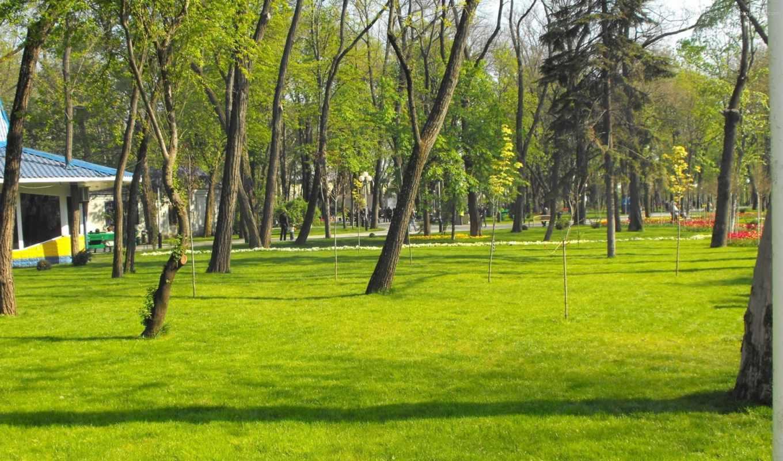 стриженый, газон, house, zone, парковая, стриженной, maisonette, обрезание, природа, зоны,