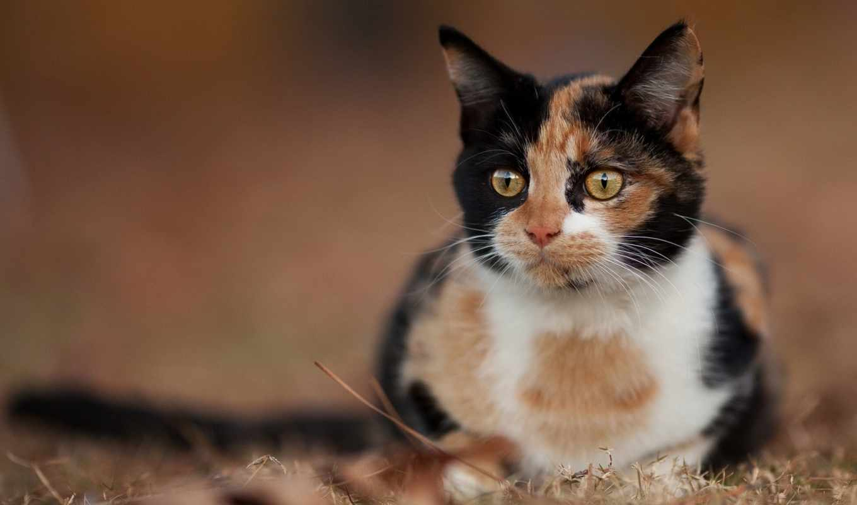животные, мб, обоях, posted, ago, количество, кот,