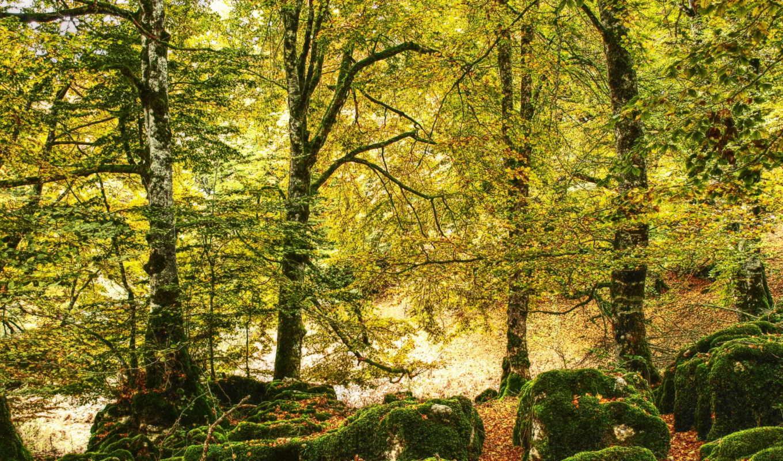 деревя, листья, лес, природа, осень, мох, картинка,