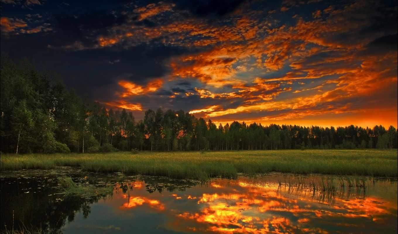 природа, summer, закат, вечер, лес, trees,