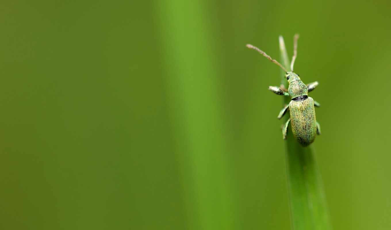 macro, heart, insectos, escarabajos, imágen, tweet, pin, mar, arte, artwork, mushrooms, trees, naturaleza,