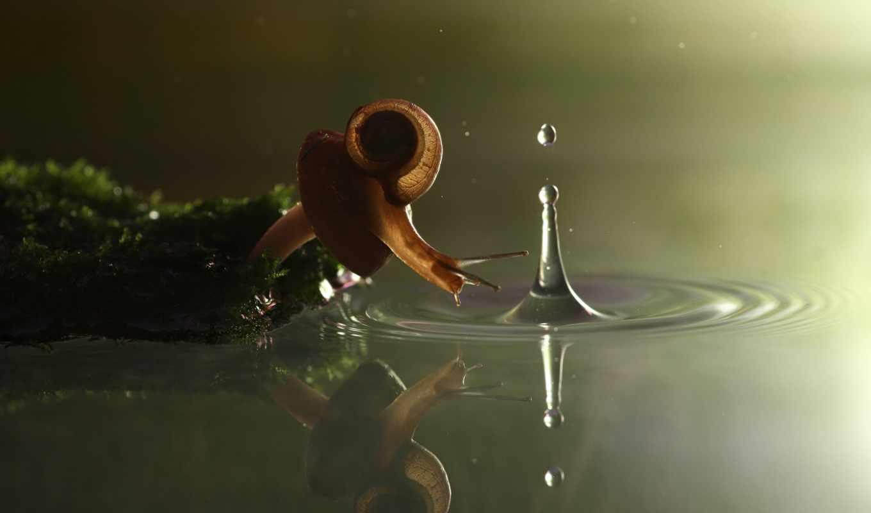 улиток, вадим, трунов, насекомых, маленькая, день, улитка, дождливый, ползет, поверхностное, дворе, области, заднем, своем, натяжение, лужи, воде, воронежской, улитки,
