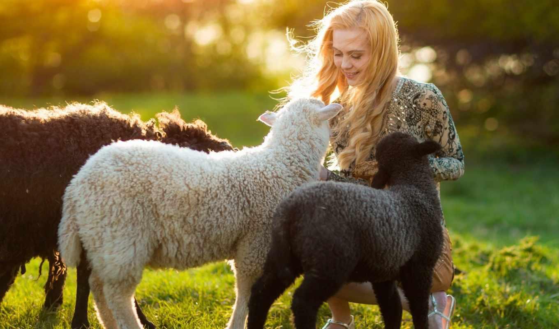 девушка, улыбка, овца, ветер, поле, трава