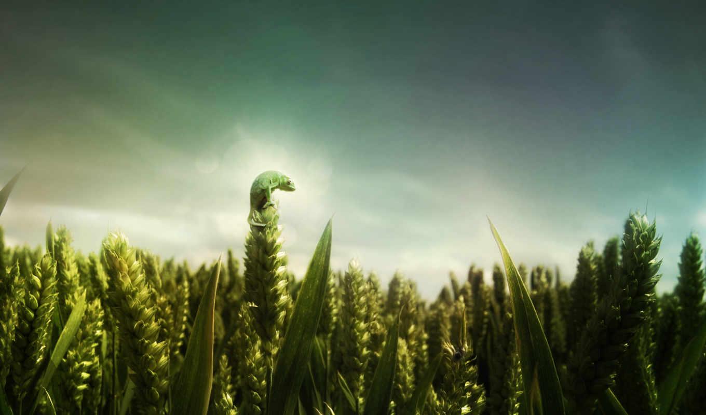 ящер, природа, android, поле, iphone, зелёный, телефон, заставки, трава,