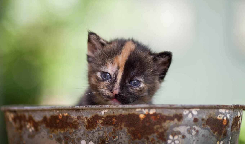кот, таз, взгляд, котенок, малыш, морда, supply, смотреть, baby, kitty