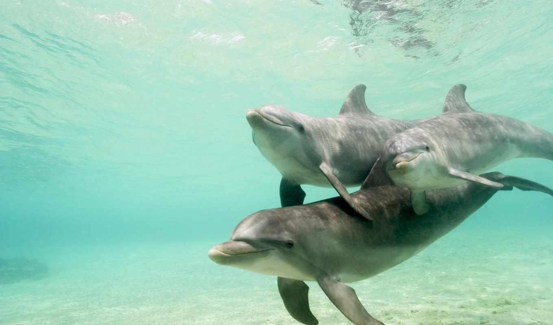 world, underwater, водой, под, дельфины, water, море,