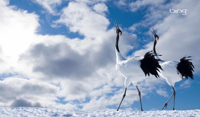 japanese, crane, pair, птицы, небо, oblaka,