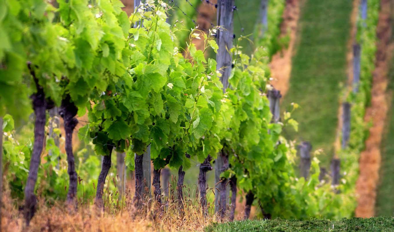 to, ipad, vineyard,