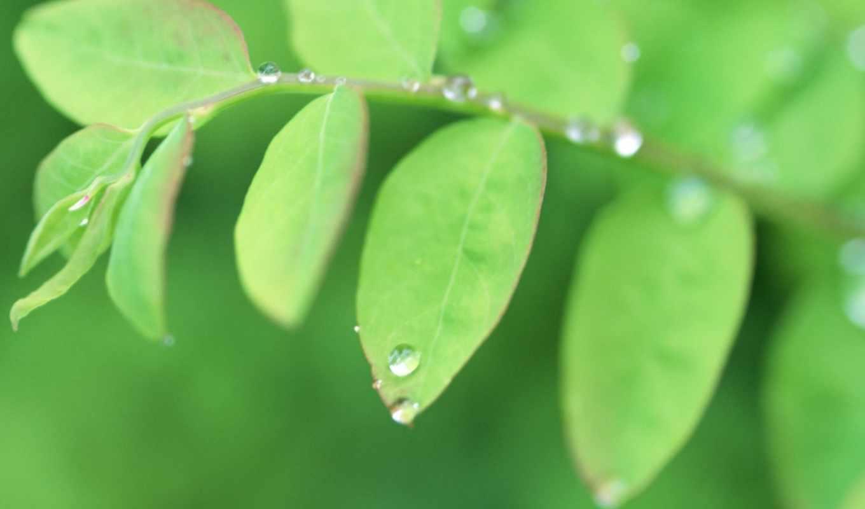 зеленые, лето, листочки, капли, лист, код,