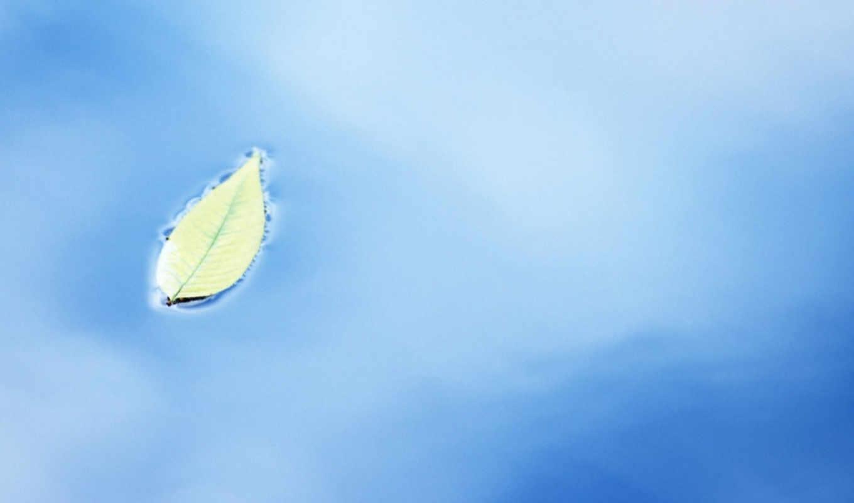 green, leaves, fresh, focus, soft, photography, pure, вода, желтый, desktop,