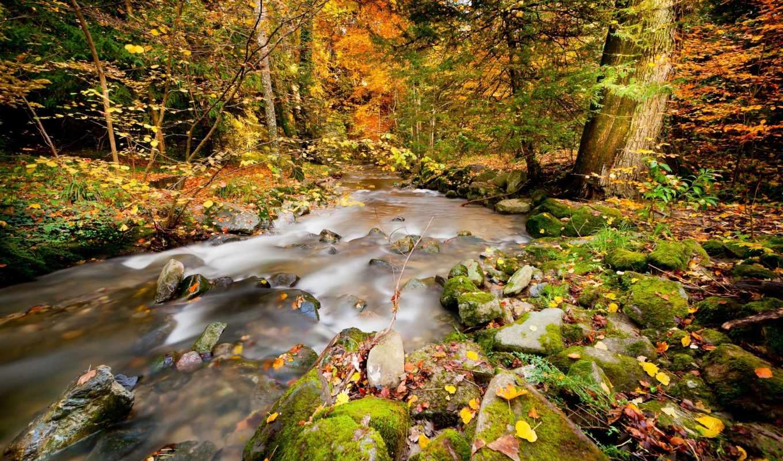 природа, реки, лес, rivers, водопады, осень, река, waterfalls,