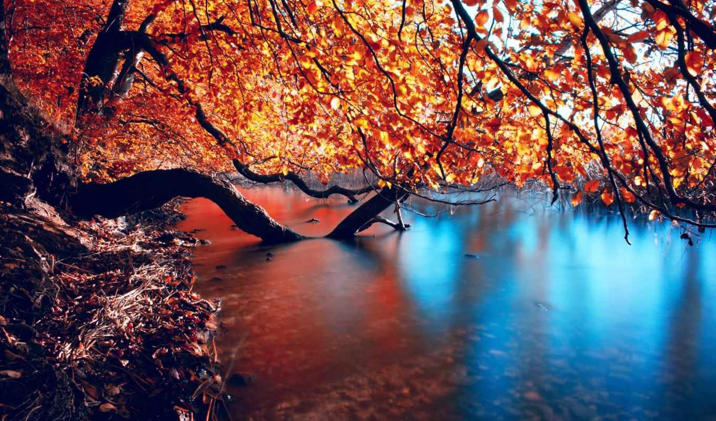 осень, природа, голова, лес, река, trees, леса,