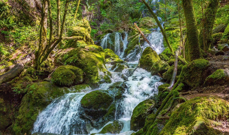 ворошить, кухни, птичий, мох, ручей, деревя, уровень, лес, камни,