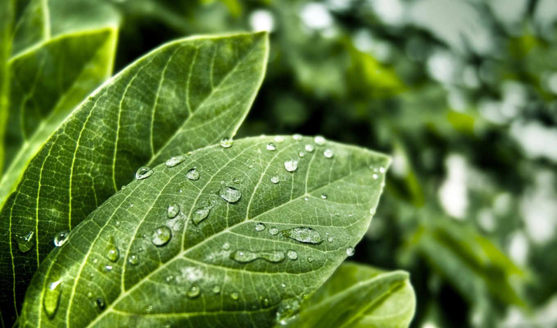 自然风光, wuxga, widescreen, wxga, wga, wide, high, uxga, plants, standard, fullscreen, definition, sxga,