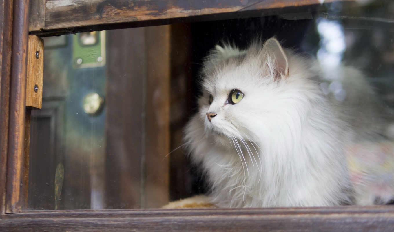 кот, waiting, окно, кошки,