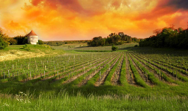 санкт, emilion, viñedos, stock, photos, burdeos, images, vineyards, fotos, free,