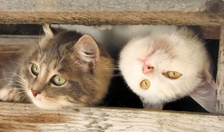 котенок, кот, funny, cats, кошенятко, pan, kitty,