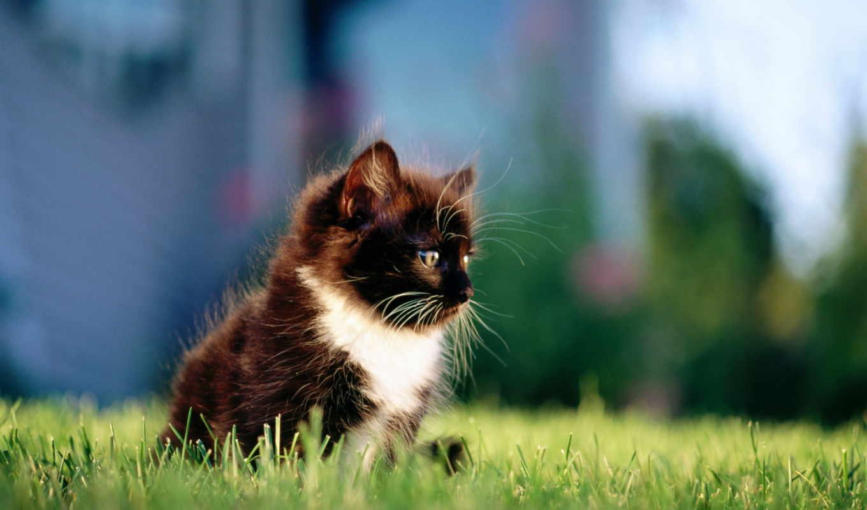 black, white, трава, кот, кошки, котенок, разных, zhivotnye,