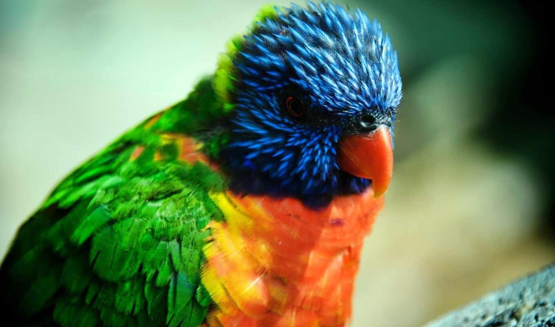 красивый, дерево, scare, попугай, птичка, shirokoformatnyi, color, drawing, makryi, птица